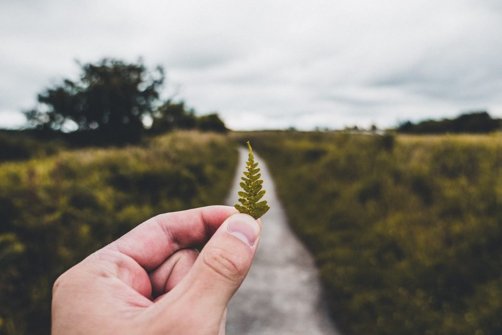 Man exploring one path and a piece of leaf to take on responsibility