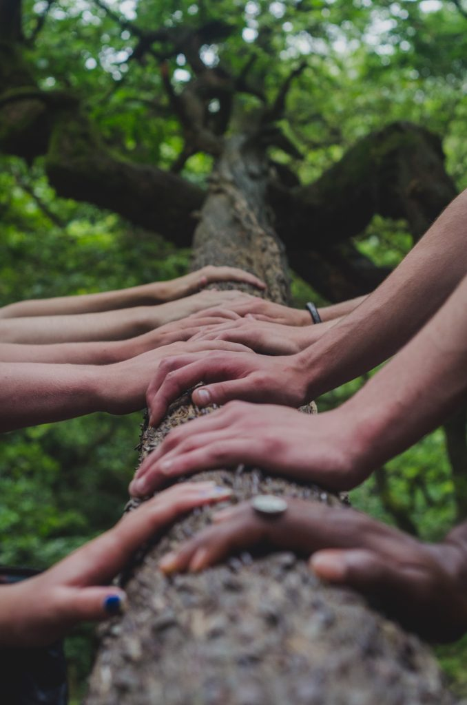 Hands on a log in a forest to show what's needed to grow your life