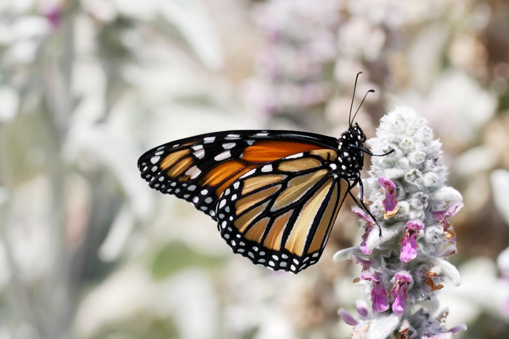 A butterfly on a plant to show the transformation that can happen when you ask yourself how can I be happy
