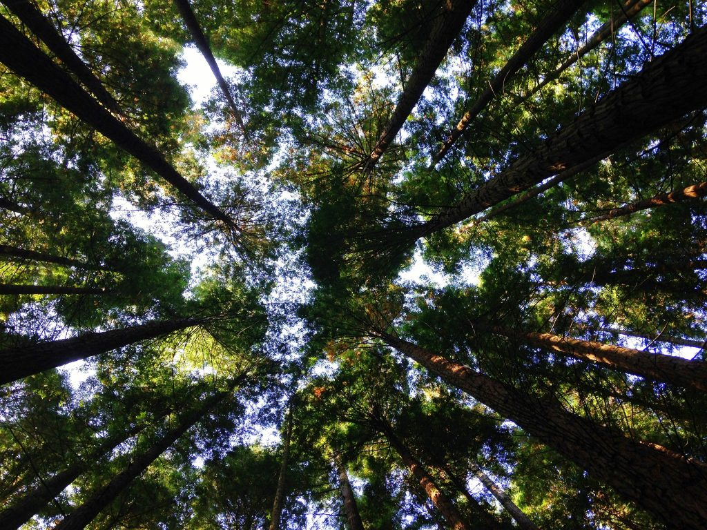 A picture of trees to show how you can get in the mood to clean your house