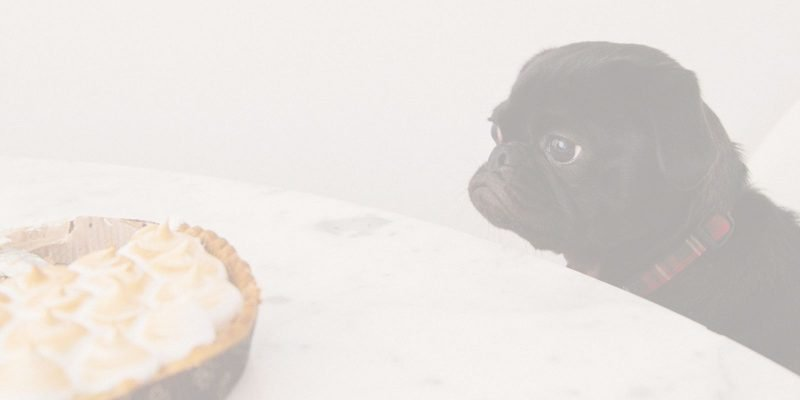 A dog looking at a pie considering if he wants it like you're considering the title what do you want? (How to figure it out and get what you want)